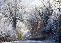 photo-arbres-gele-a-avignon-vaucluse-84000-stephane-ruel-photographe-professionel-avignon-vaucluse-provence
