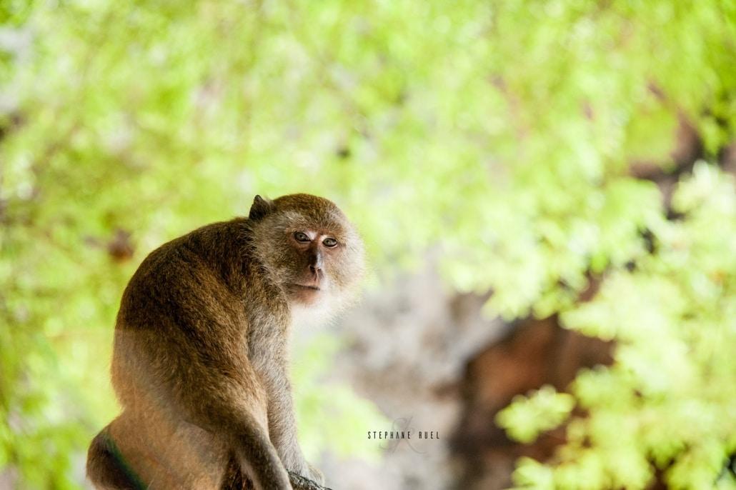 photo-singe-a-avignon-Provence-vaucluse-84000-stephane-ruel-photographe-professionnel-avignon-vaucluse-de-Provence