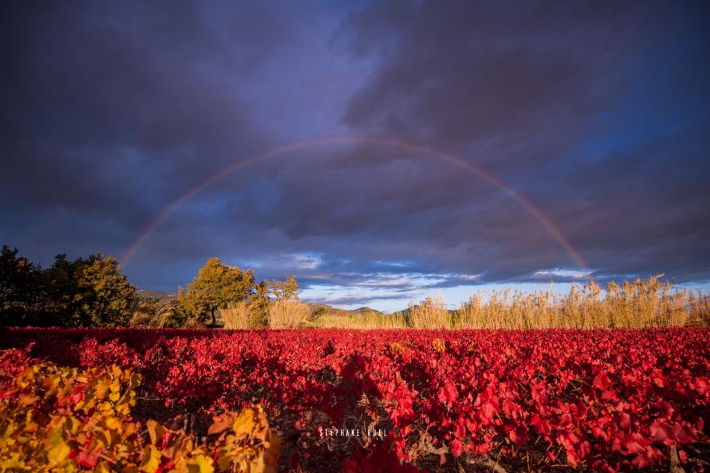 Champs de vignes près des Dentelles de Montmiraille