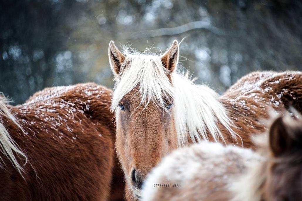 belle-photo-cheval-hiver--lozere--a-avignon-vaucluse-84000-stephane-ruel-photographe-professionel-provence-