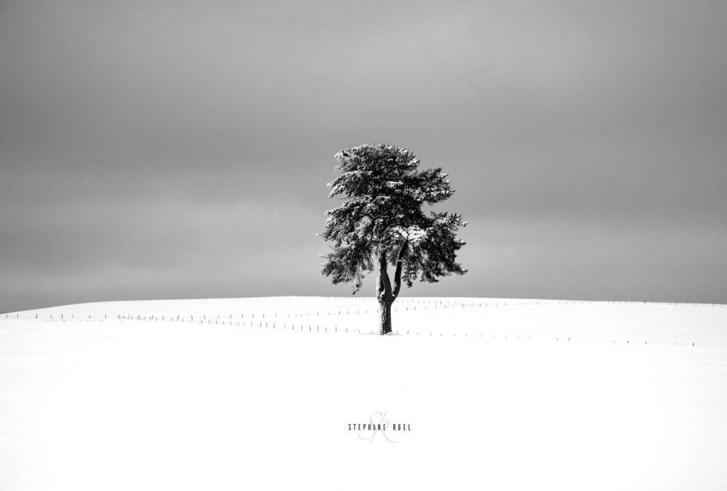 photo-arbre-noir-et-blanc-neige-a-avignon-vaucluse-84000-stephane-ruel-photographe-professionnel-avignon-vaucluse-provence