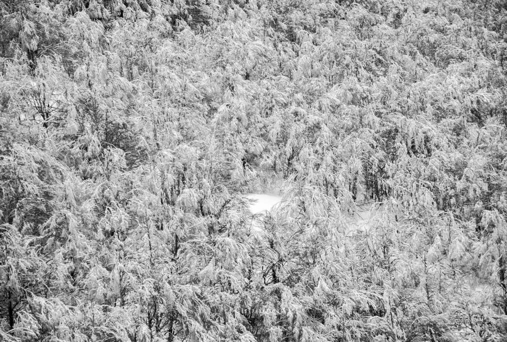 photo-arbres-foret--noir-et-blanc-neige-a-avignon-vaucluse-84000-stephane-ruel-photographe-professionnel-avignon-vaucluse-provence