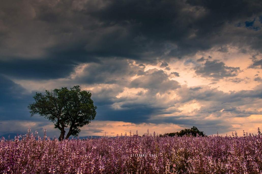 photo-de-paysage-arbre-nuage-incroyable-en-superbe-couleur---photographie-en-couleur-a-avignon-vaucluse-84000-stephane-ruel-photographe-professionel
