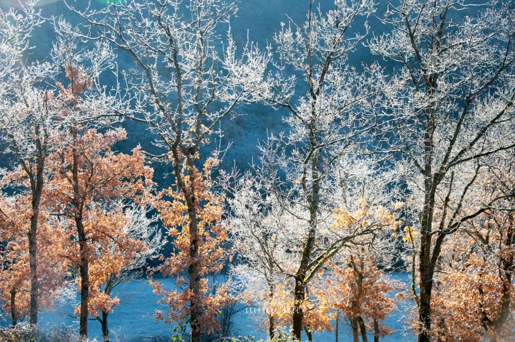 photos-de-paysage-arbre-hiver-verglas-en-superbe-couleur---photographie-en-couleur-a-avignon-vaucluse-84000-stephane-ruel-photographe-professionel nature hiver avignon