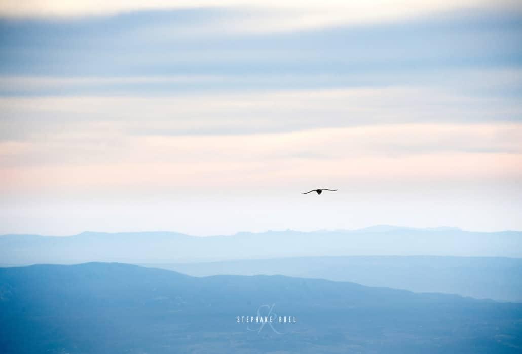 photographie-84000-couleur-oiseau-ventoux-portrait-a-avignon-84000-vaucluse-stephane-ruel-photographe professionnel avignon
